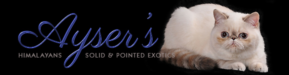 Ayser's Exotics & Himalayans